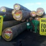greenpeace_bois_precieux-563×337